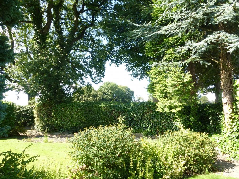 rear garden pic 6